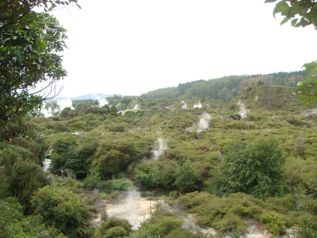 Field of steaming vents, Rotorua, NZ 2009.