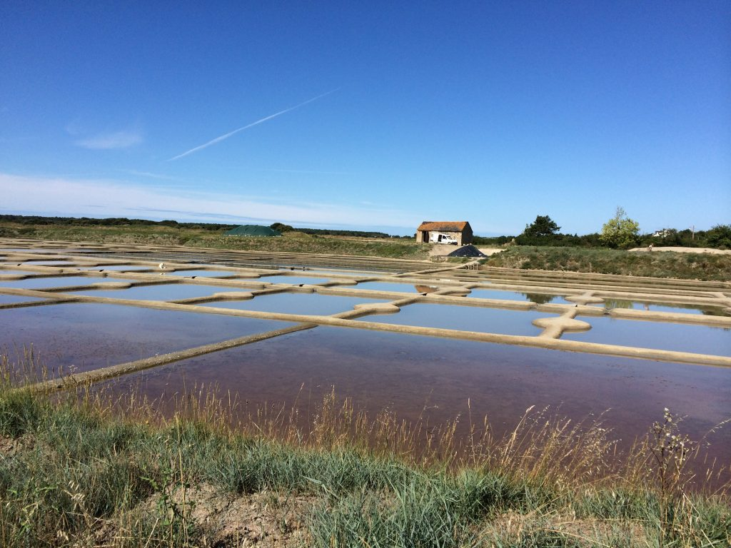 The salt farms of the Guerande, Liore, France.  2014