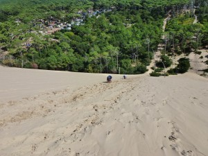 These guys made Pam's day, they were crawling. At least we managed to stay upright, Dune du Pilat.  France. 2014